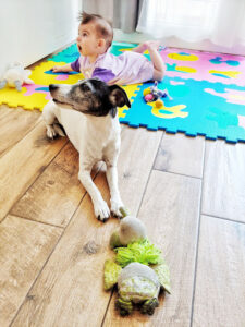 baby on a hardwood floor with a jack russell terrier laying down in front of the baby