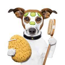 cartoon jack russell terrier with a shower scrub and shower brush
